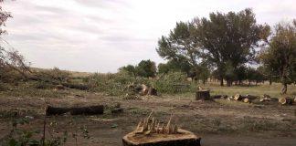 вырубка деревьев в Дебальцево